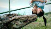 หนังจระเข้ Alligator Movies